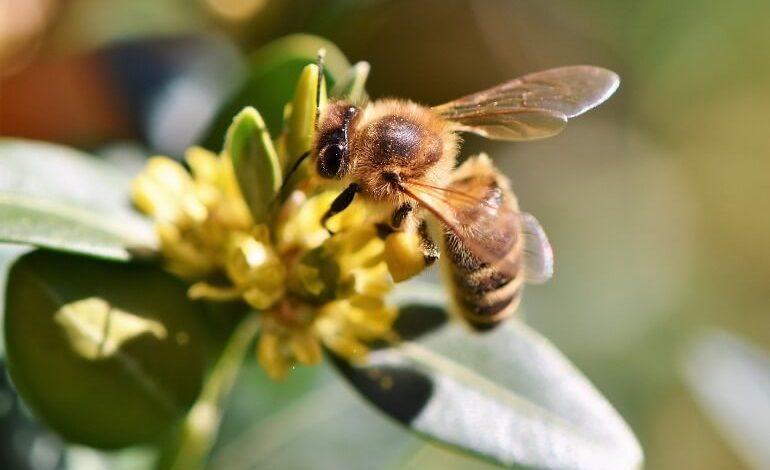 Закон регламентирует разведение пчел на дачном участке