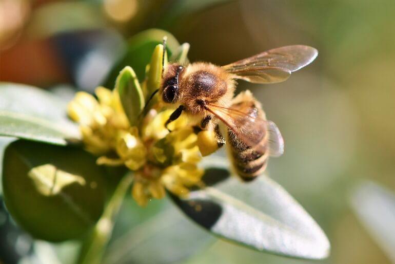 Можно ли держать пчел на дачном участке