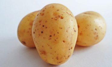 Сортовой картофель: опыт членов хабаровского клуба «Урожай»