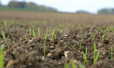 Как восстановить почву после наводнения: советы агронома