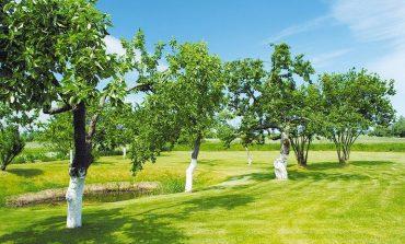 Опыт хабаровских дачников: необычная защита сада от вредителей