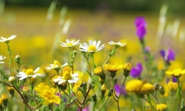 Полевые цветы - украшение нашего сада