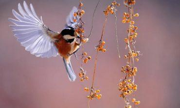 Как привлечь птиц на дачный участок?