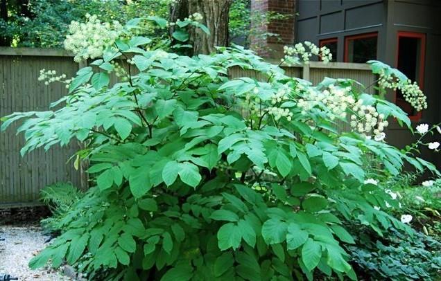 Растения от усталости: особенности выращивания на участке