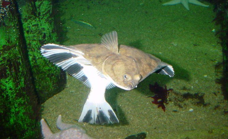 Музей-аквариум Рыбы Амура (0+). 1 января — 31 декабря, с 11 до 17. Живая коллекция