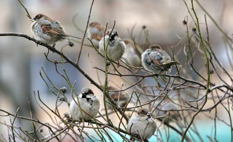 Приметы весны: погоду предсказывают птицы