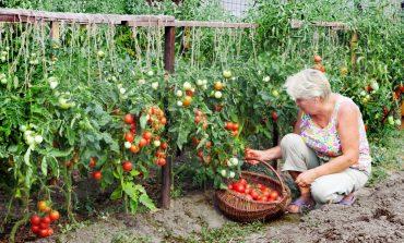 Хабаровские дачники возмущены решением краевого правительства по компенсации проезда