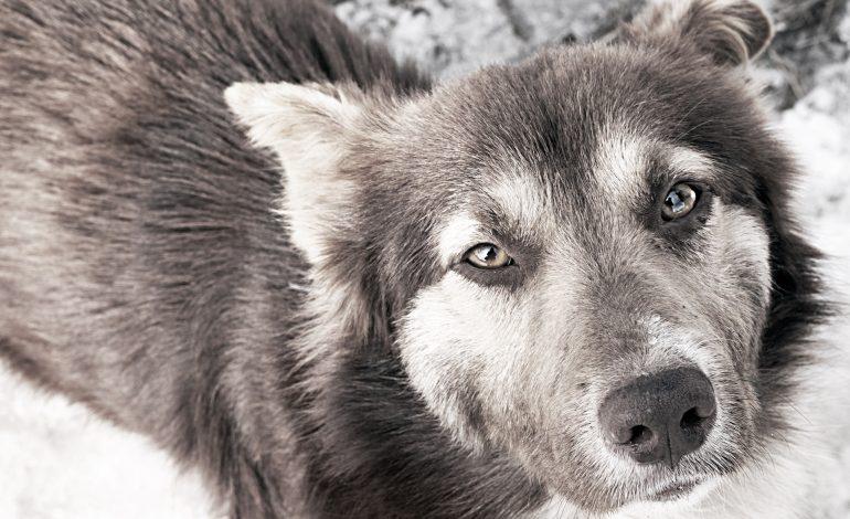 Противники зверья в Хабаровске звереют на глазах