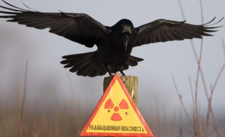 Участникам ликвидации последствий аварии на Чернобыльской АЭС положены меры соцподдержки