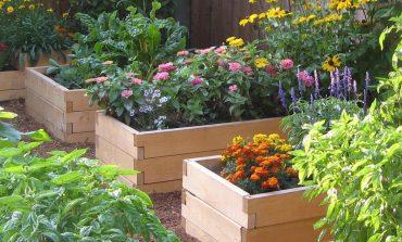 Как вырастить сад на... досках