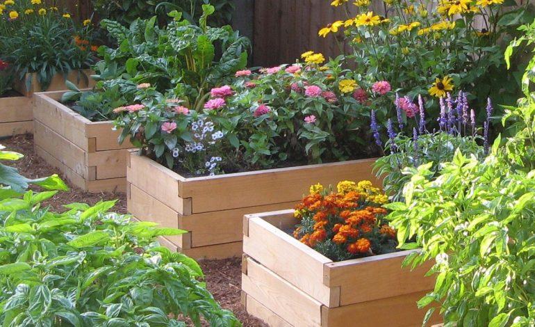 Как вырастить сад на… досках
