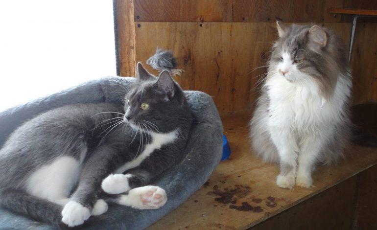Животных из хабаровского приюта «Теремок» ограбили