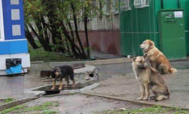 Кто избавит Хабаровск от бродячих псов