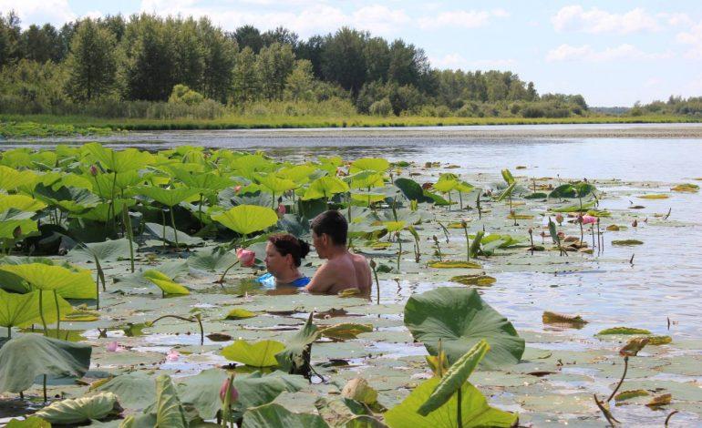 В пригороде Хабаровске обустроят место для любования лотосами