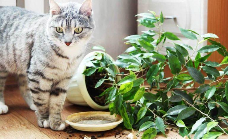 Как защитить от кошки комнатные цветы
