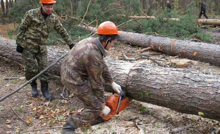 Сколько в Хабаровском крае стоит лес для постройки своего дома