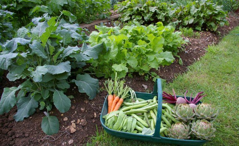 Чем кормить растения летом