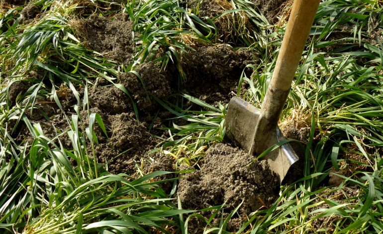 Обогащение почвы с помощью сидератов