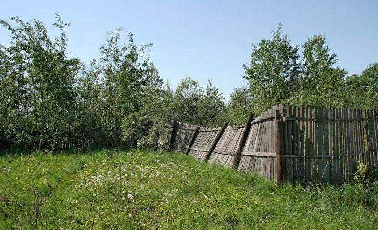 Что делать с брошенными дачными участками