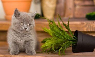 Как я защищаю цветы от котенка Кузи