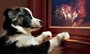 Что предлагают ветеринарные клиники Хабаровска