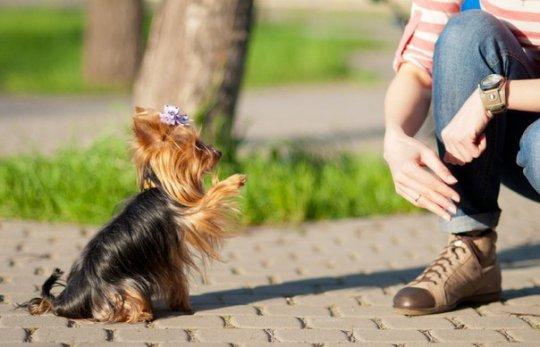 Как, где и чему учат собак в Хабаровске