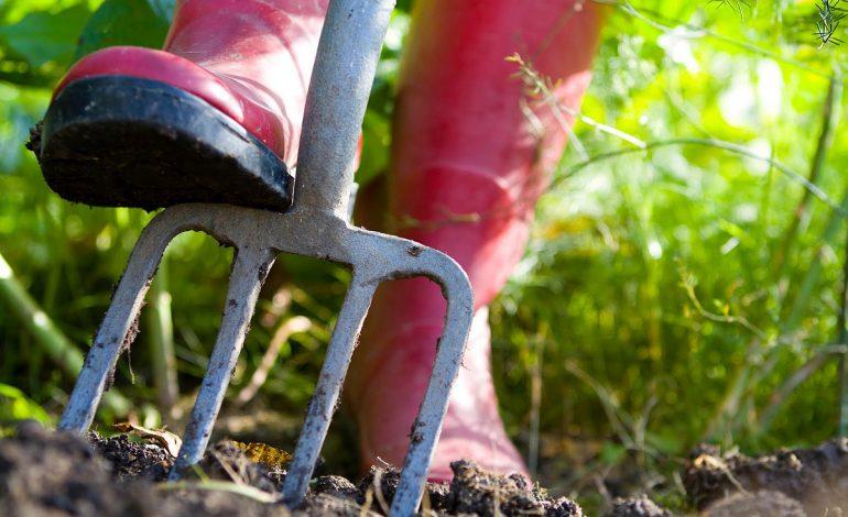 Работы в саду и огороде на вторую половину сентября