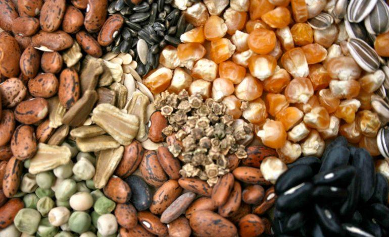 Собираем семена на своем участке