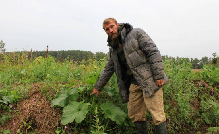 Тысячи кустов заморской клубники выращивают хабаровчане-отшельники в пригороде Хабаровска