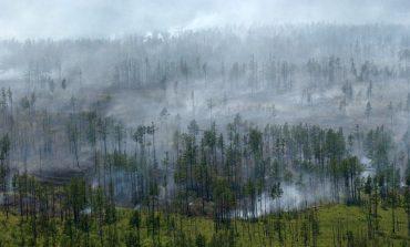 Лес не горит: на территории края потушили последний пожар