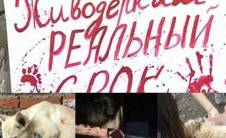 Пикет против живодерства пройдет 29 октября в Хабаровске