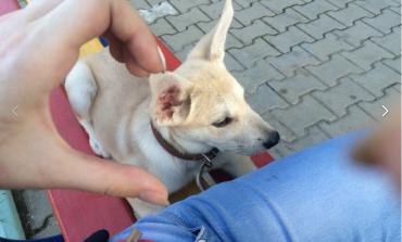 Почти полмиллиона человек подписали петицию с требованием наказать виновных в издевательстве над животными в Хабаровске