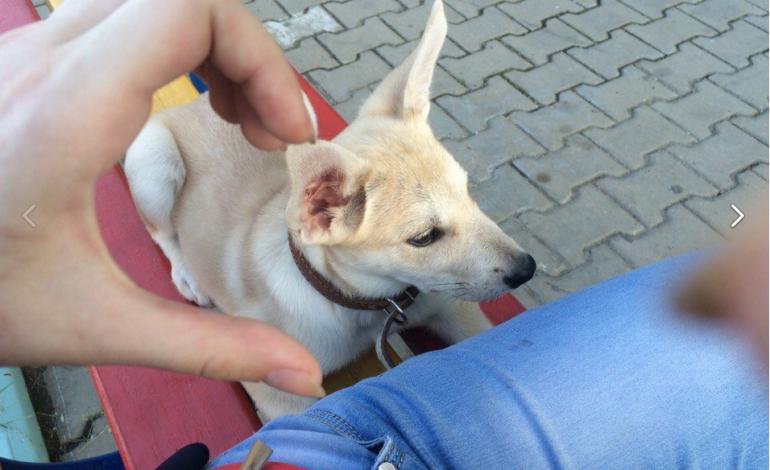 У обвиняемой в деле о жестоком обращении с животными явные психические отклонения – хабаровский психотерапевт