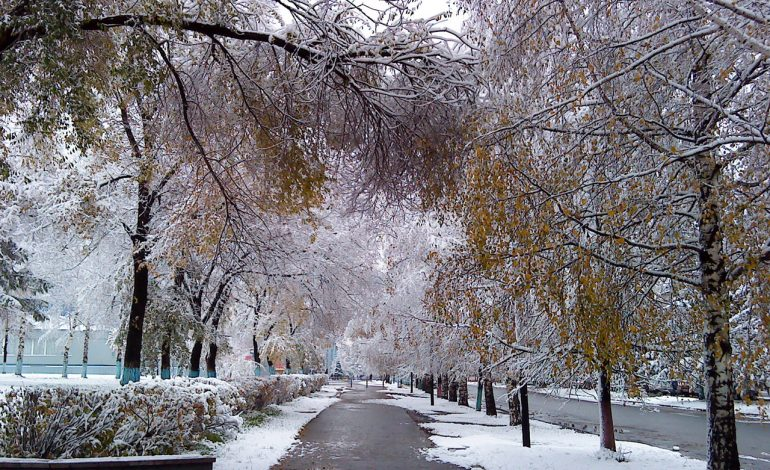 В Хабаровске на этой неделе возможен первый снег