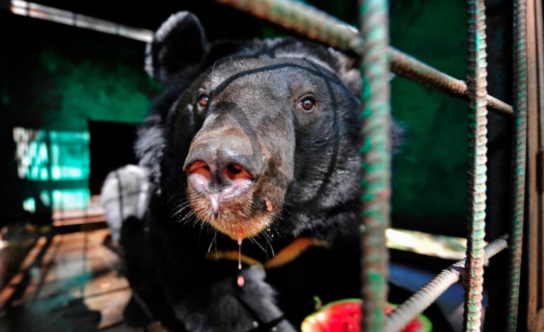 Медведицу, терроризировавшую село под Хабаровском, поймали с помощью попкорна