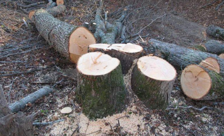 В районе краевой больницы незаконно вырубили деревья
