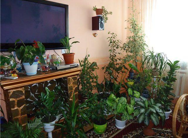 Комнатные растения, которые могут жить вдали от окон