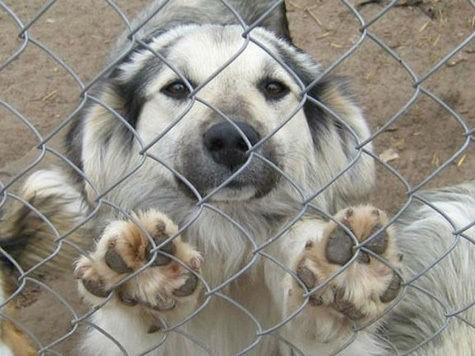 Мошенники в Хабаровске зарабатывают деньги на бездомных собаках