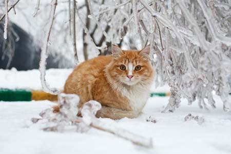 Прогноз погоды в Хабаровске и крае на среду, 30 ноября