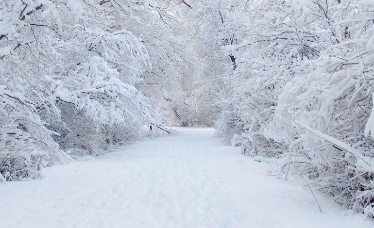 Прогноз погоды в Хабаровске и крае на четверг, 3 ноября
