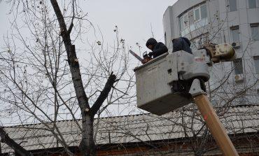 Деревья в Хабаровске «подстригают» к зиме (ФОТО)