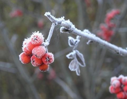 О погоде в Хабаровске и крае на среду, 9 ноября