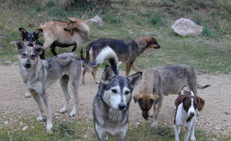 Налог на собак и их регистрацию предлагали ввести еще 200 лет назад