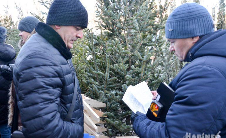 Рейд по елочным базарам Хабаровска не показал явных нарушений законодательства