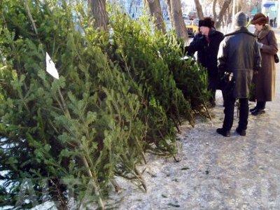 Где в Хабаровске можно купить елку: список мест
