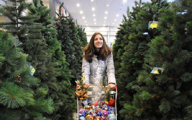 В Хабаровске не налажена цивилизованная торговля елками