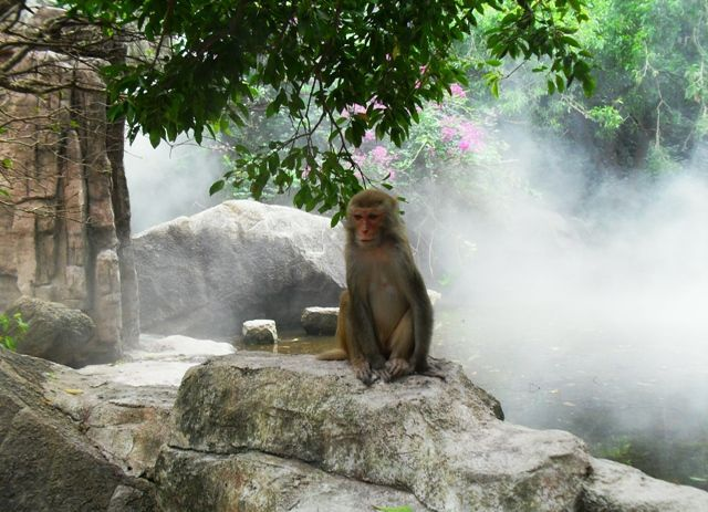 остров обезьян экскурсия фото