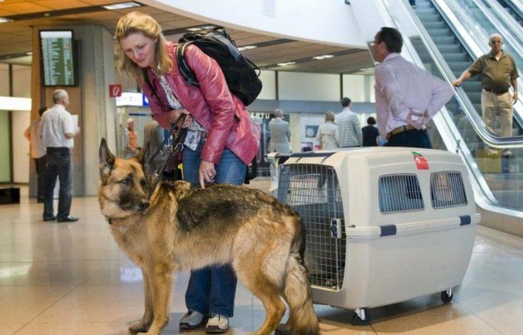 Как вернуть стоимость испорченного при перелете багажа