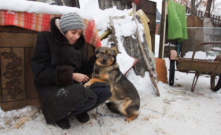 Хабаровчанка Екатерина Личко отказалась от работы ради спасения бездомных животных (ФОТОРЕПОРТАЖ)
