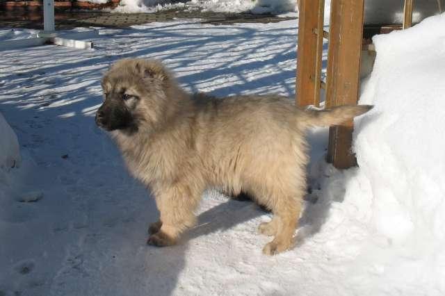 Новый дом для брошенного щенка нашелся быстро